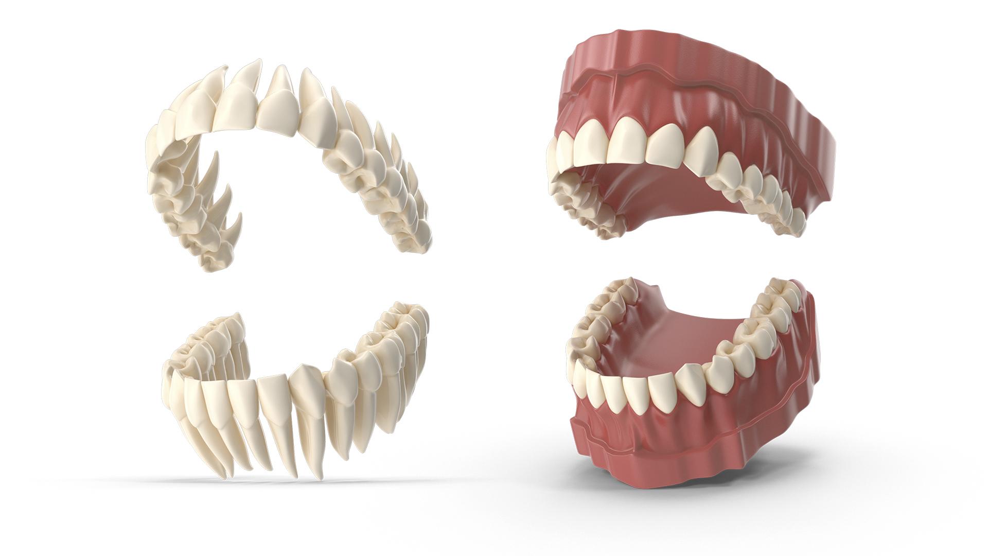 simulacion 3d boca dientes diente muela pala colmillo incisivo grupoaudiovisual