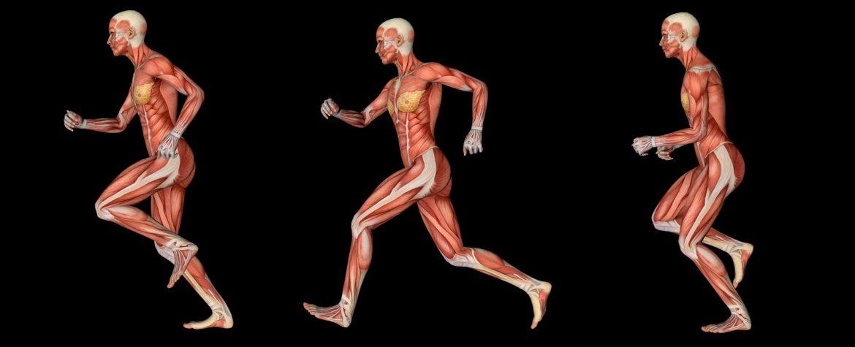 GrupoAudiovisual-que-es-la-animacion-3d-estudio-de-animacion-cuerpo-corriendo-en-3-poses