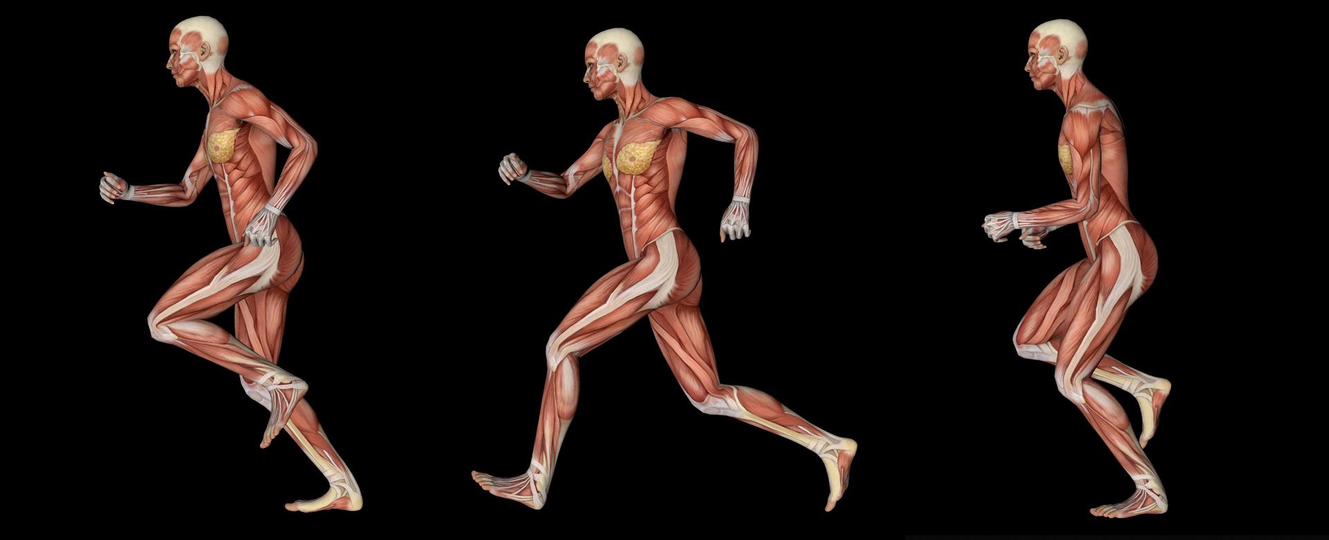 qué-es-la-animación-3d-estudio-de-animacion-eda3d-cuerpo-corriendo-en-3-poses