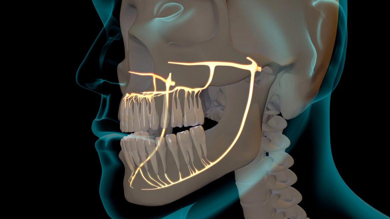 nervios-dentales-grupoaudiovisual