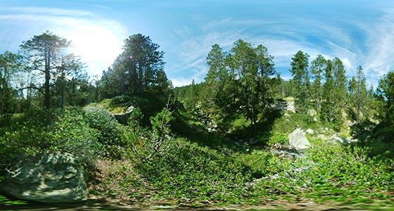Bosque-04 Fotos 360