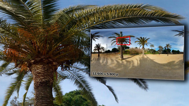 Zoom-Foto-360-Parque-con-Palmeras-1920x1080-GrupoAudiovisual-Descargas360