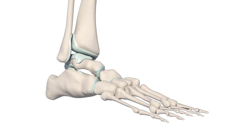 Huesos-del-pie-en-3D